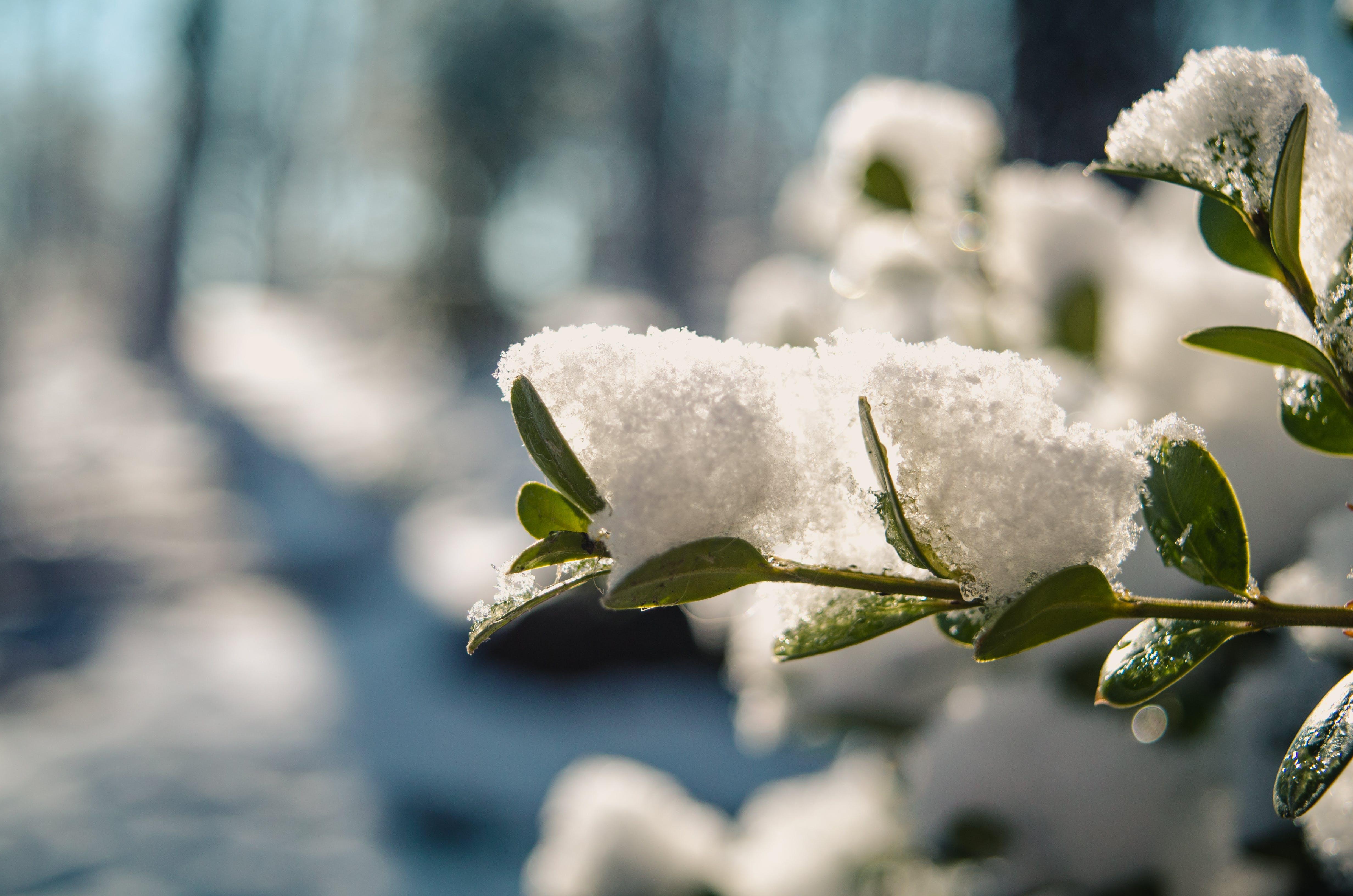 Kostenloses Stock Foto zu ast, eis, farbe, frost