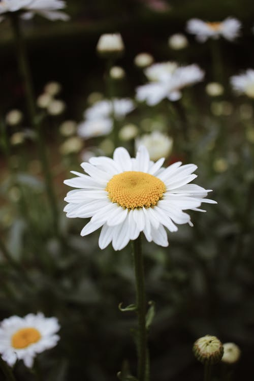 Blooming white flowers with yellow center and gentle petals on thin stem growing in daylight