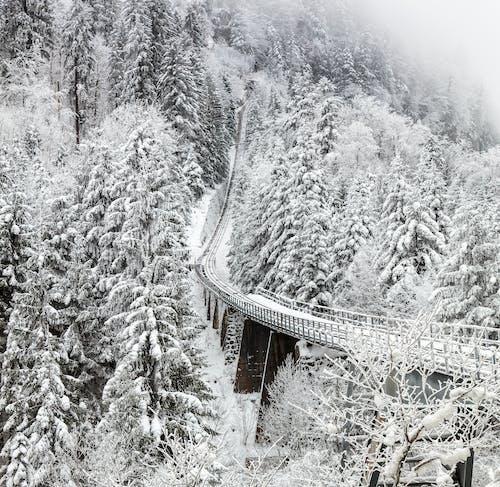 Ảnh lưu trữ miễn phí về bạch Tuyết, băng, băng giá, bối cảnh