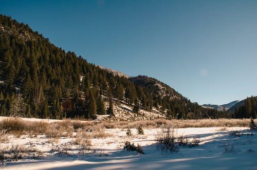 Kostenloses Stock Foto zu alpin, bäume, berge, blauer himmel