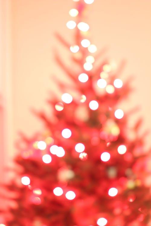 Darmowe zdjęcie z galerii z boże narodzenie, choinka, drzewo, światła