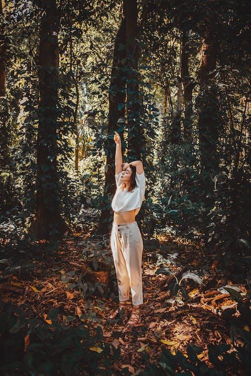 Бесплатное стоковое фото с árvore, floresta, natureza