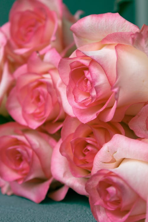 Bouquet of fresh pink roses arranged on green surface
