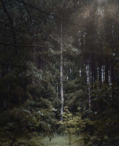 垂直ショット, 木, 森の中の無料の写真素材