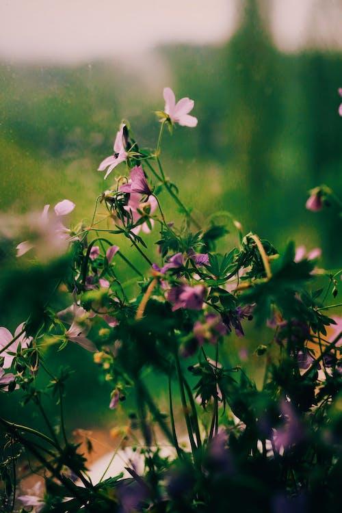 White Flower on Green Grass