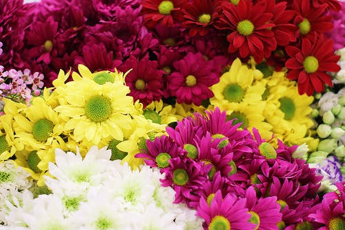 A Close-Up Shot of Colorful Flowers