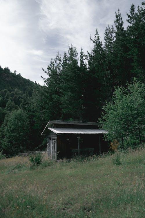 Free stock photo of abandoned, arboles, casa