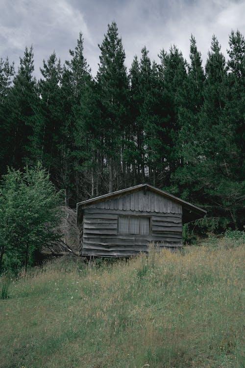 Free stock photo of abandoned, arboles, barn