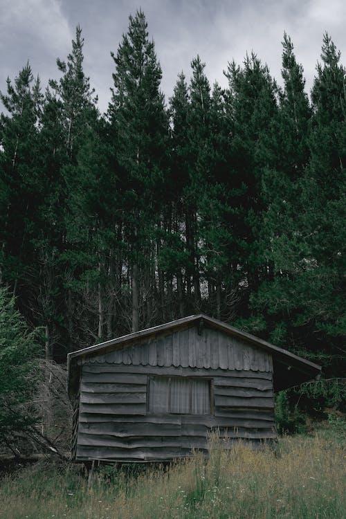 Photos gratuites de arbres, bois, cabane
