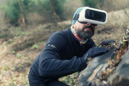 Gratis stockfoto met bomen, bossen, daglicht, digitaal