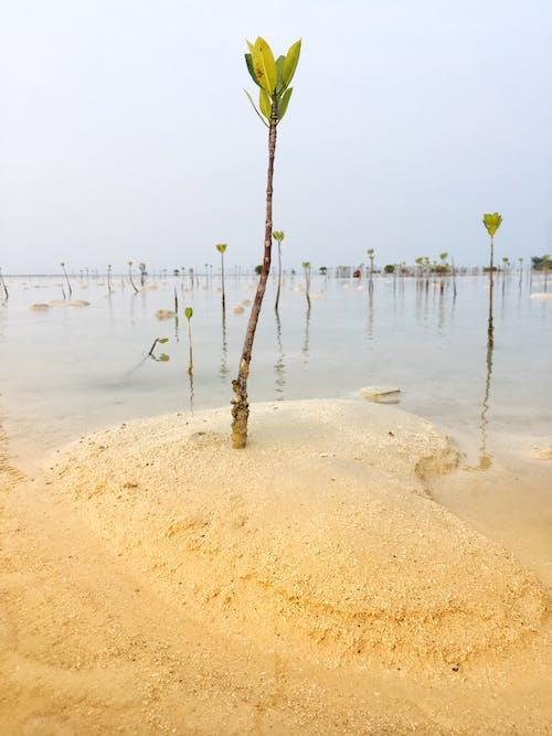 คลังภาพถ่ายฟรี ของ ความรัก, ชายหาด, ทราย, ทะเล