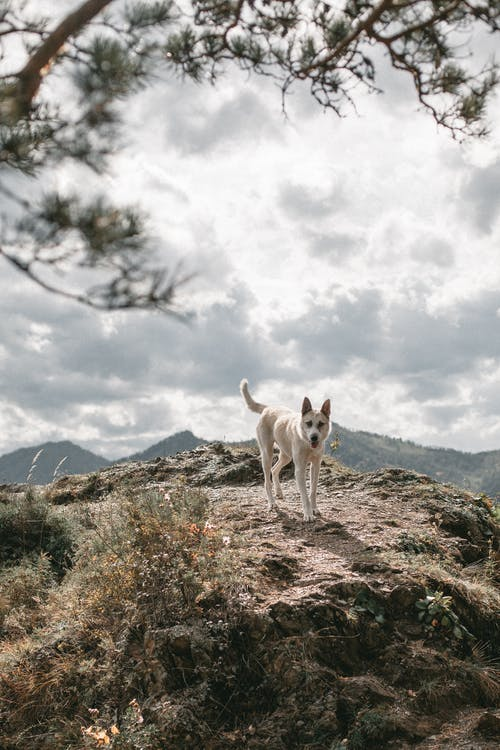 Dog on rough mountain under cloudy sky