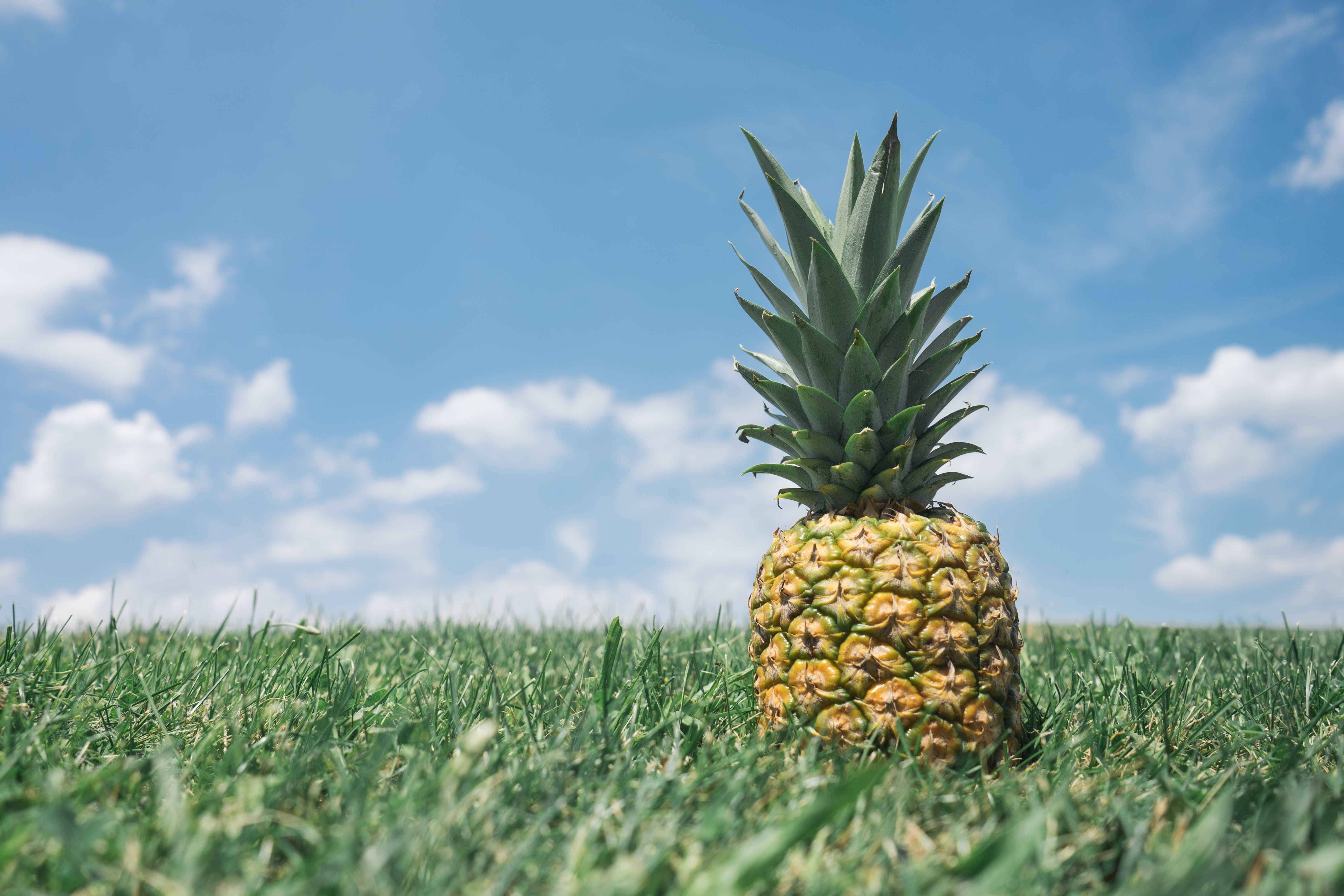 Close-up Photography of Pineapple on Grass