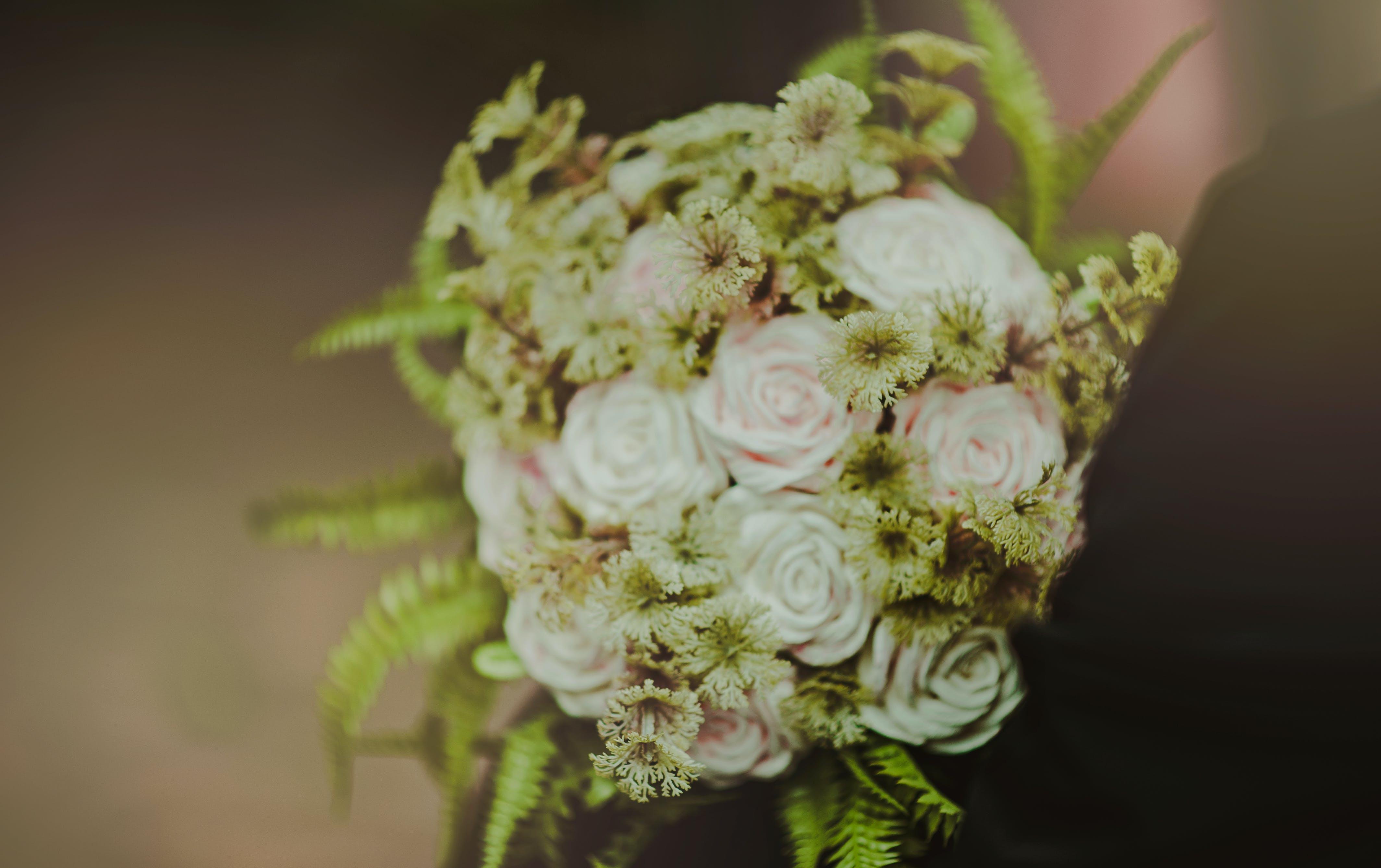 Δωρεάν στοκ φωτογραφιών με ανθίζω, ανθισμένος, άνθος, γαμήλια τελετή