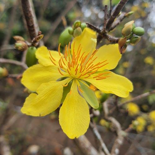 Photos gratuites de abricot, fleur de printemps, fleur jaune