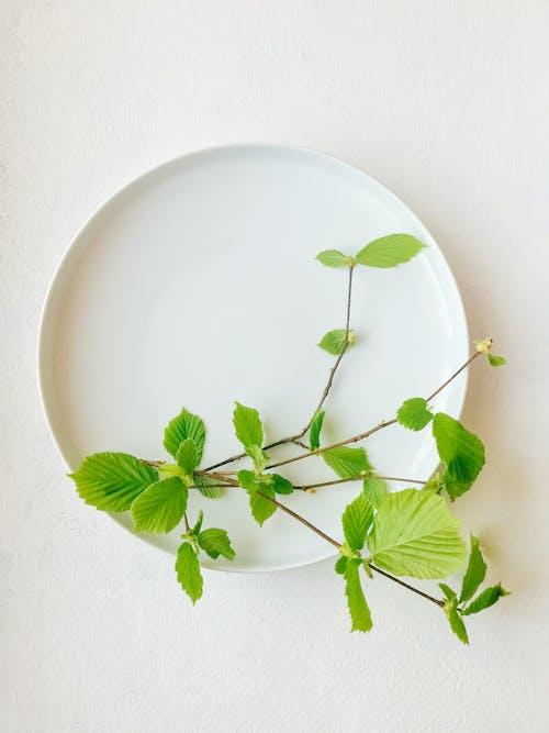 Green Leaves on White Ceramic Plate