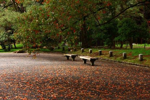 Kostnadsfri bild av bänkar, dagsljus, färger, gräs