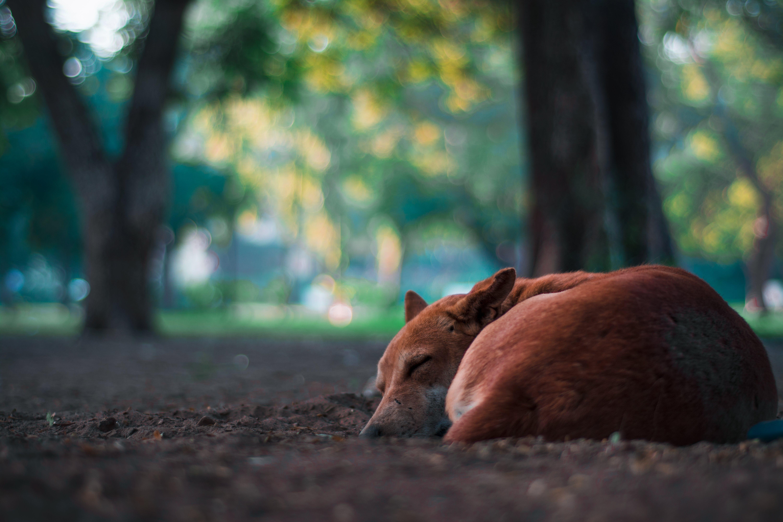 Gratis arkivbilde med dagslys, dyr, hund, jord