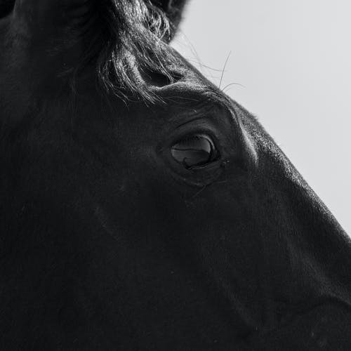 Close Up Photo of a Horse's Eye