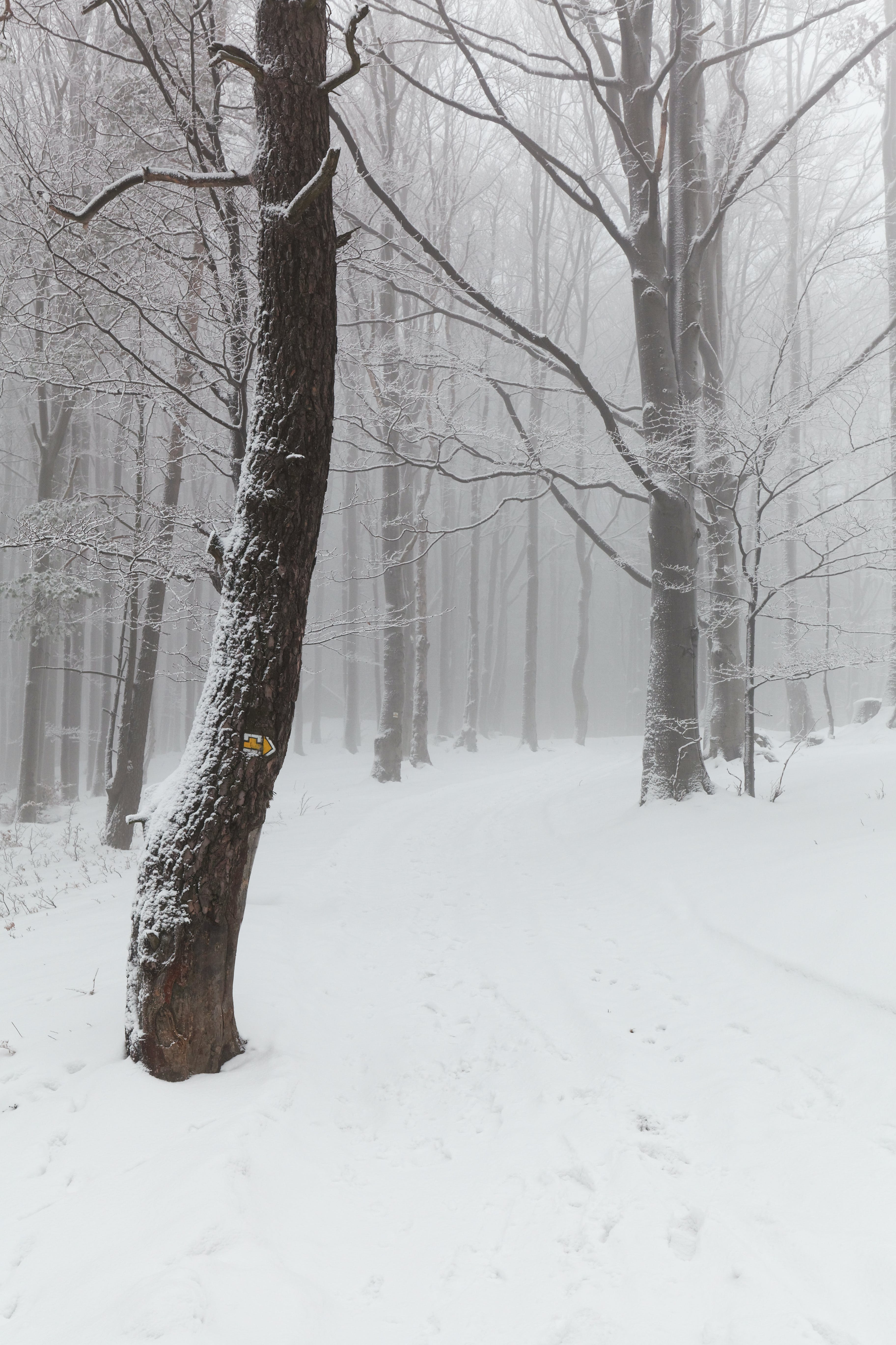 Free stock photo of snow, clouds, trees, winter