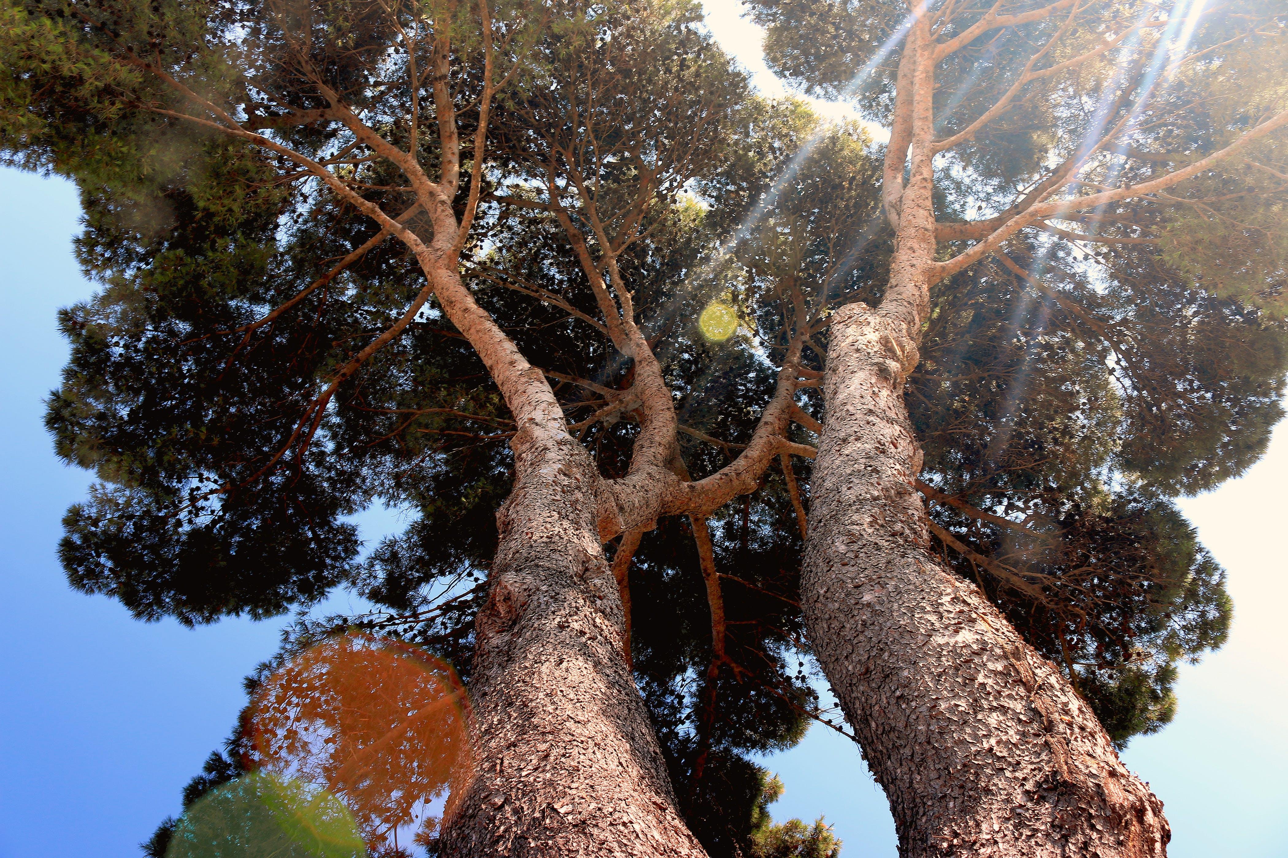 lens flare, nature, sunny