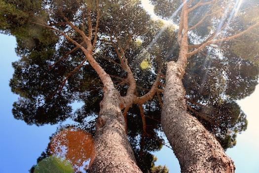 Free stock photo of nature, sunny, lens flare, tree