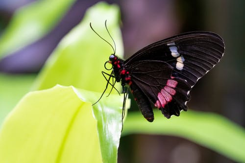 Free stock photo of botanical, botanical garden, butterfly