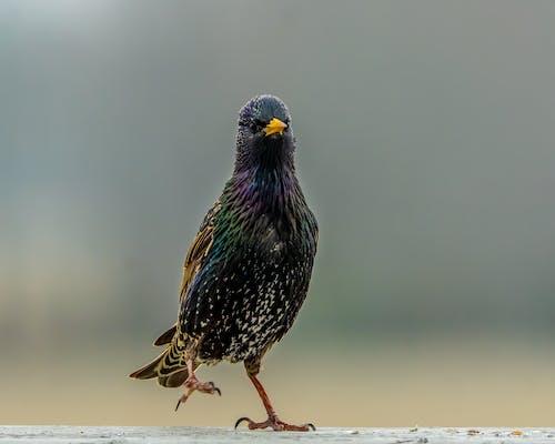 Fotos de stock gratuitas de al aire libre, alas, animal
