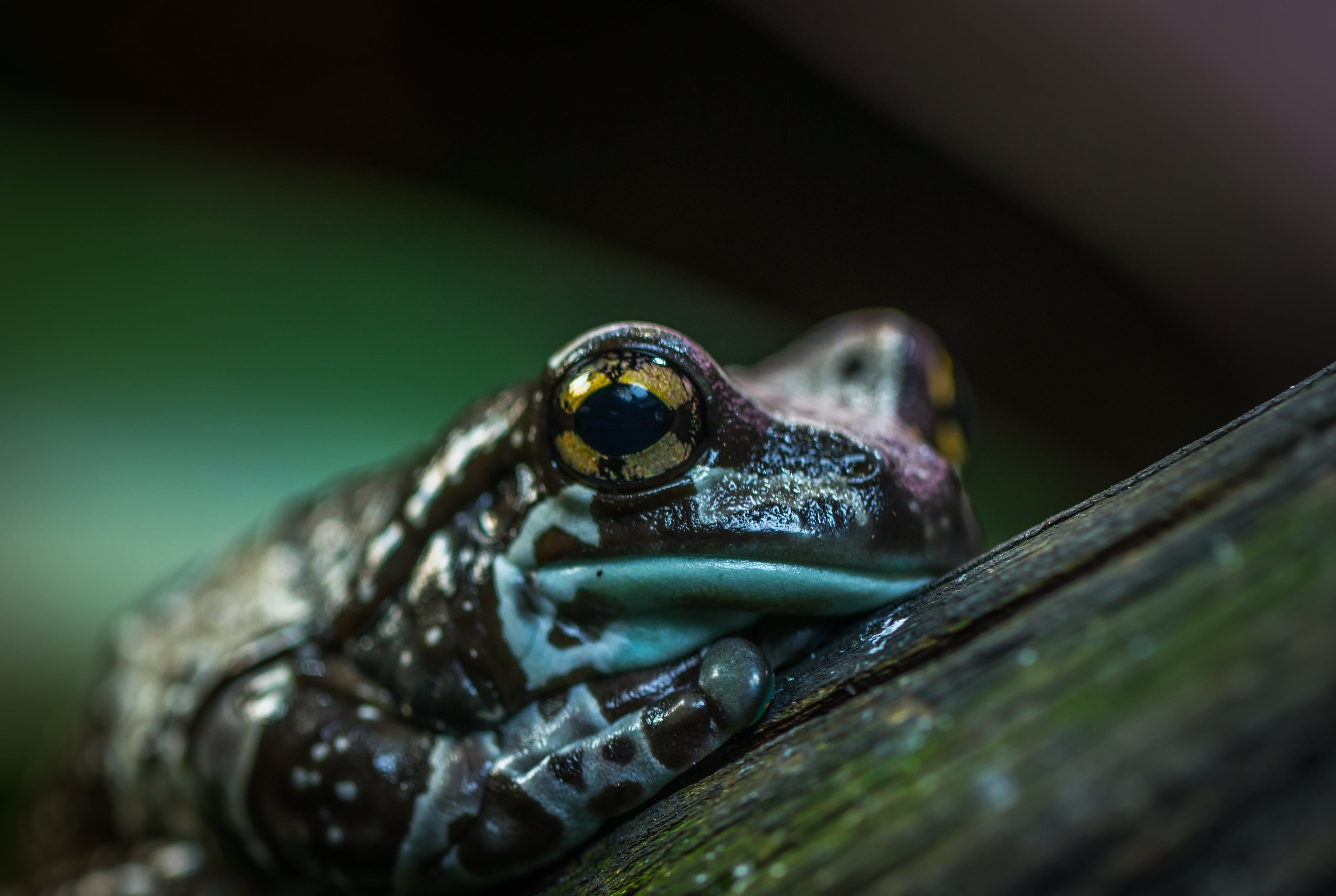 Selective Focus Photo of Brown and Green Frog