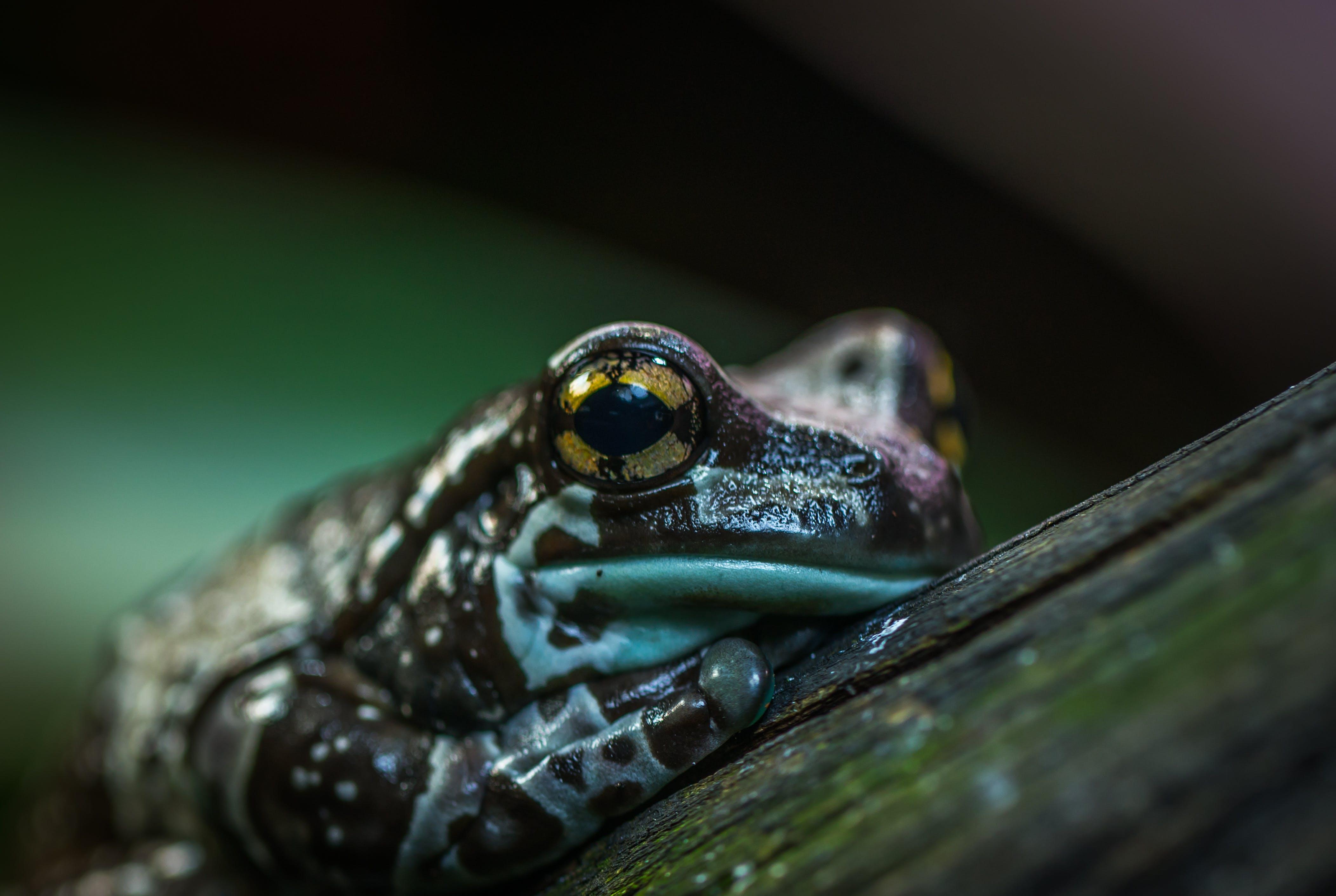 Kostenloses Stock Foto zu amphibie, auge, biologie, draußen