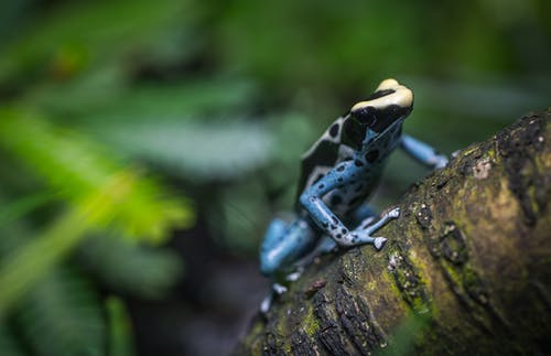 Black and Brown Frog on Three Branch