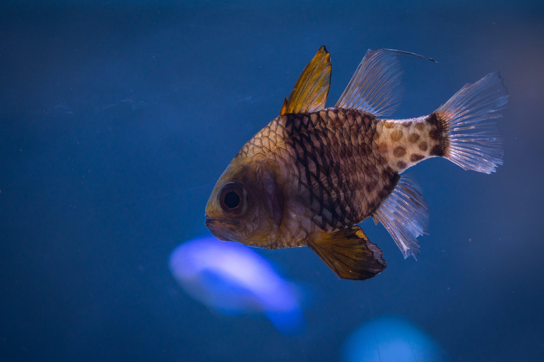 Free stock photo of fish