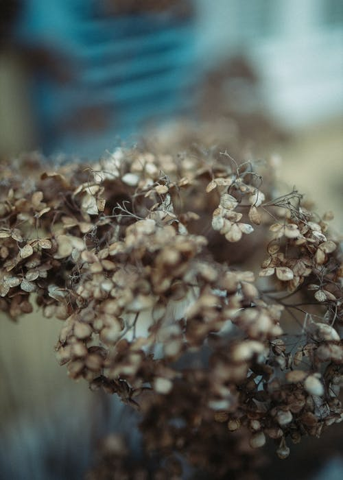Bunch of dried flowers with thin twigs
