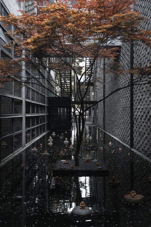 Foto profissional grátis de ao ar livre, arquitetura, árvore