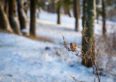 Brown Bird on Brown Branch