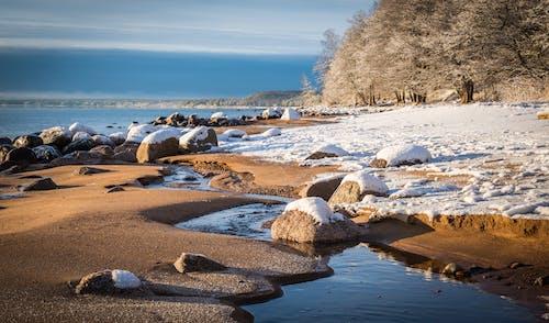 Foto profissional grátis de água, alvorecer, areia, árvores
