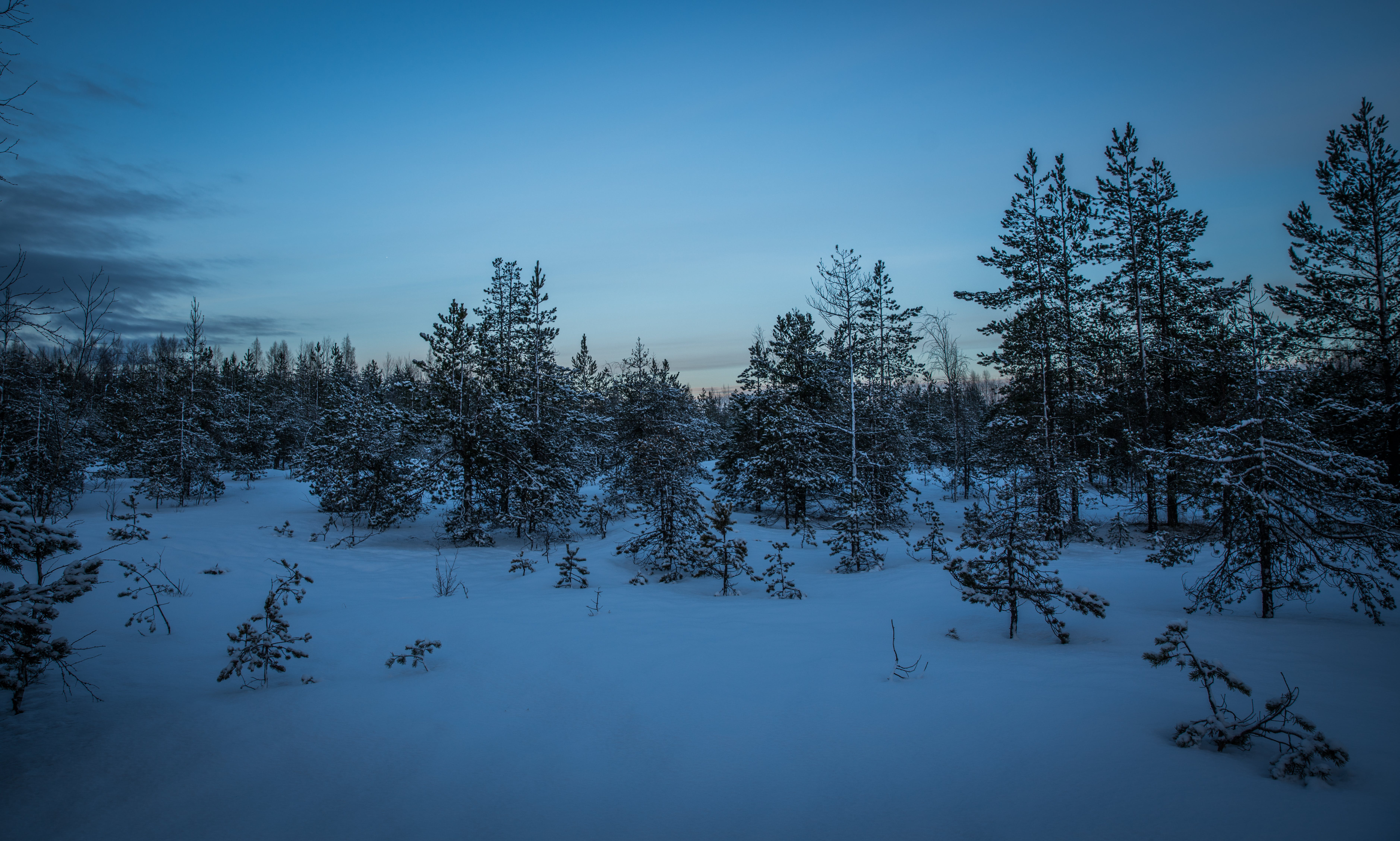 Green Pine Trees With Snow Photography