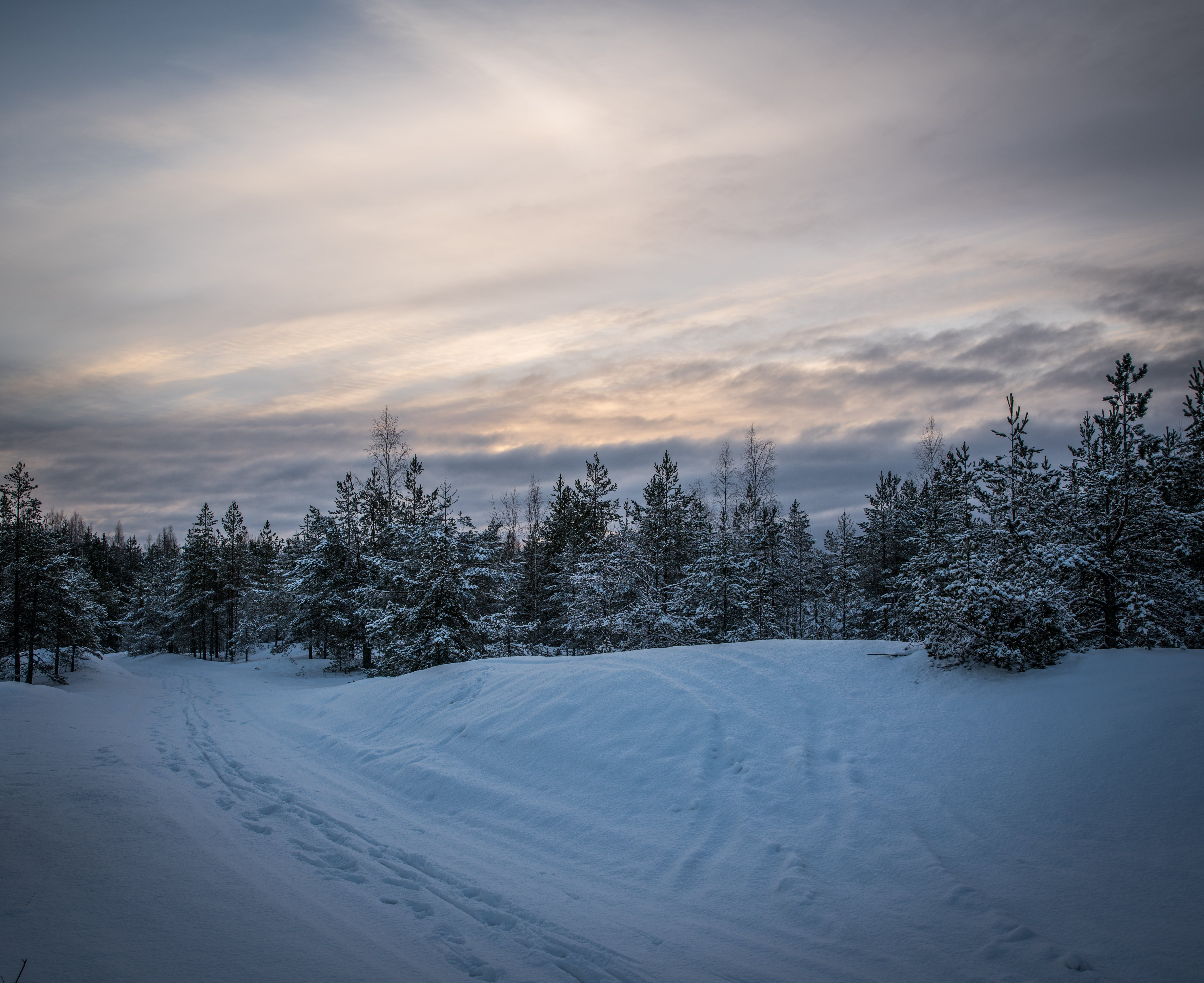 Green Pine Trees Forest Surrounded by Snow Pile