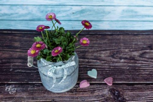 คลังภาพถ่ายฟรี ของ กระจุก, กลีบดอกไม้, กลุ่ม