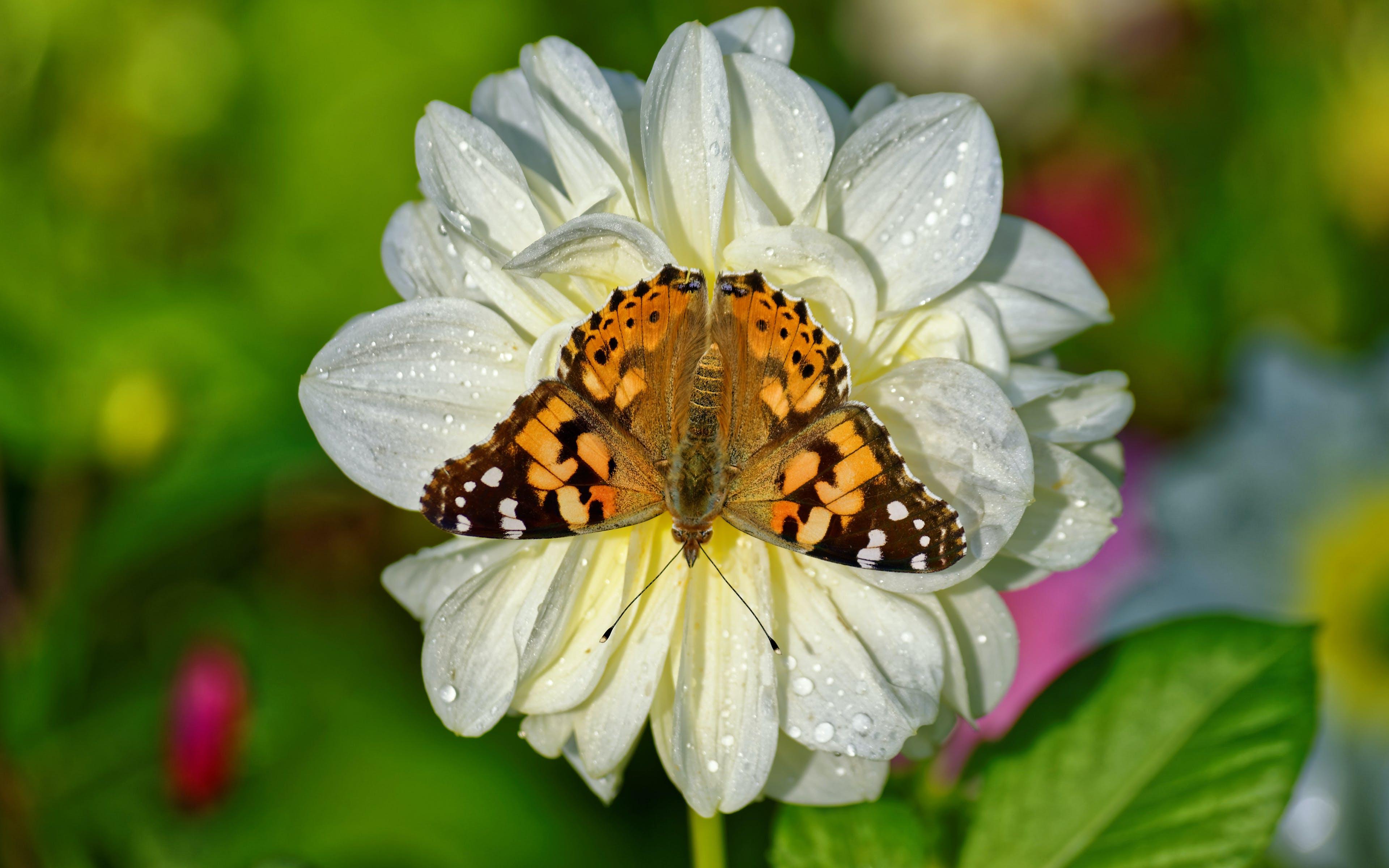 Foto d'estoc gratuïta de animal, bonic, botànic, brillant