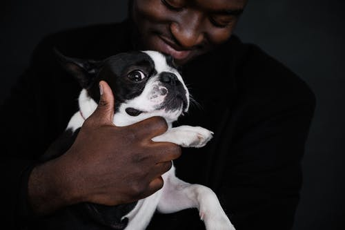 Crop African American male owner smiling while holding adorable Boston Terrier looking at camera