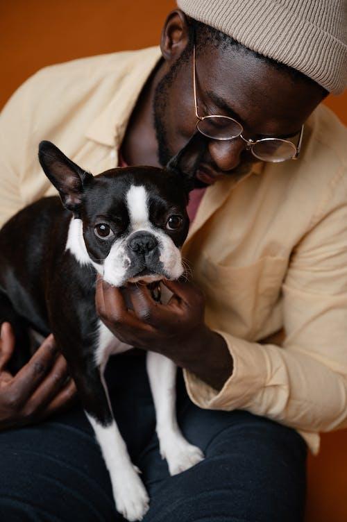 Základová fotografie zdarma na téma afroameričan, bostonský teriér, brýle