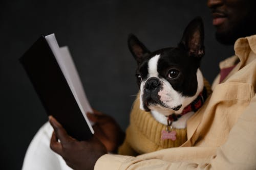 Crop anonymous African American male owner sitting with Boston terrier and reading book against black background