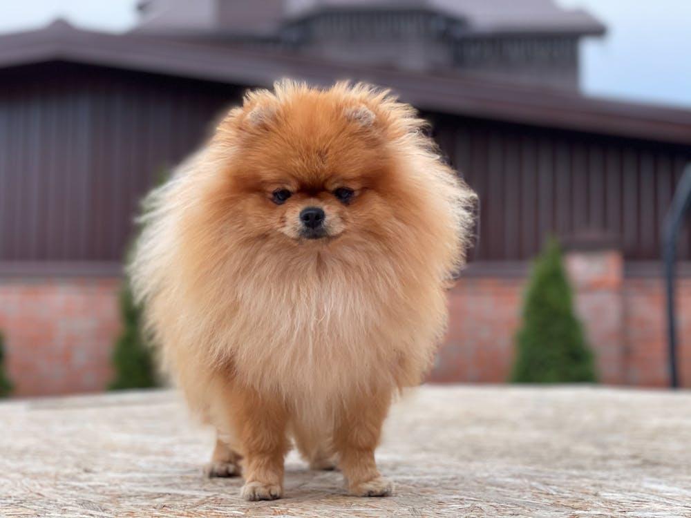 Free stock photo of animal, canine, cute