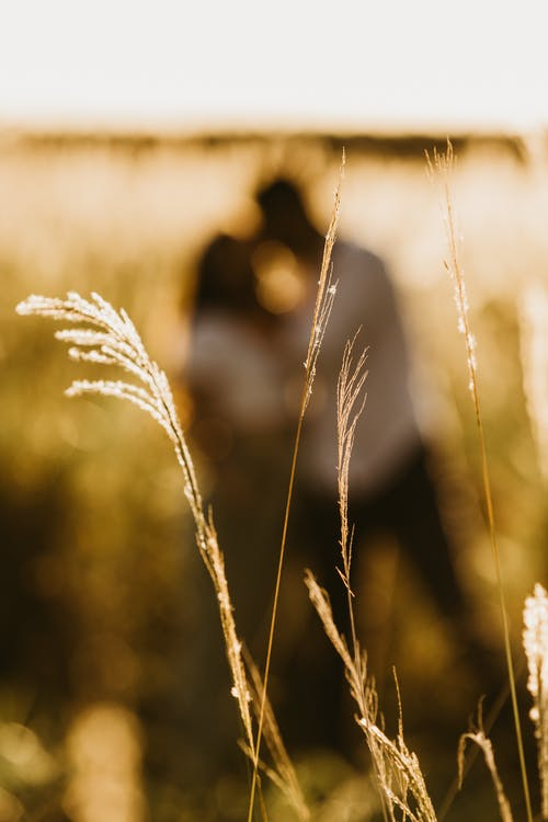 Photos gratuites de aube, automne, blé
