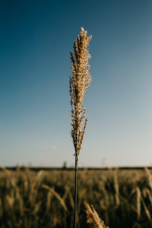 乾草, 吸管, 增長 的 免費圖庫相片
