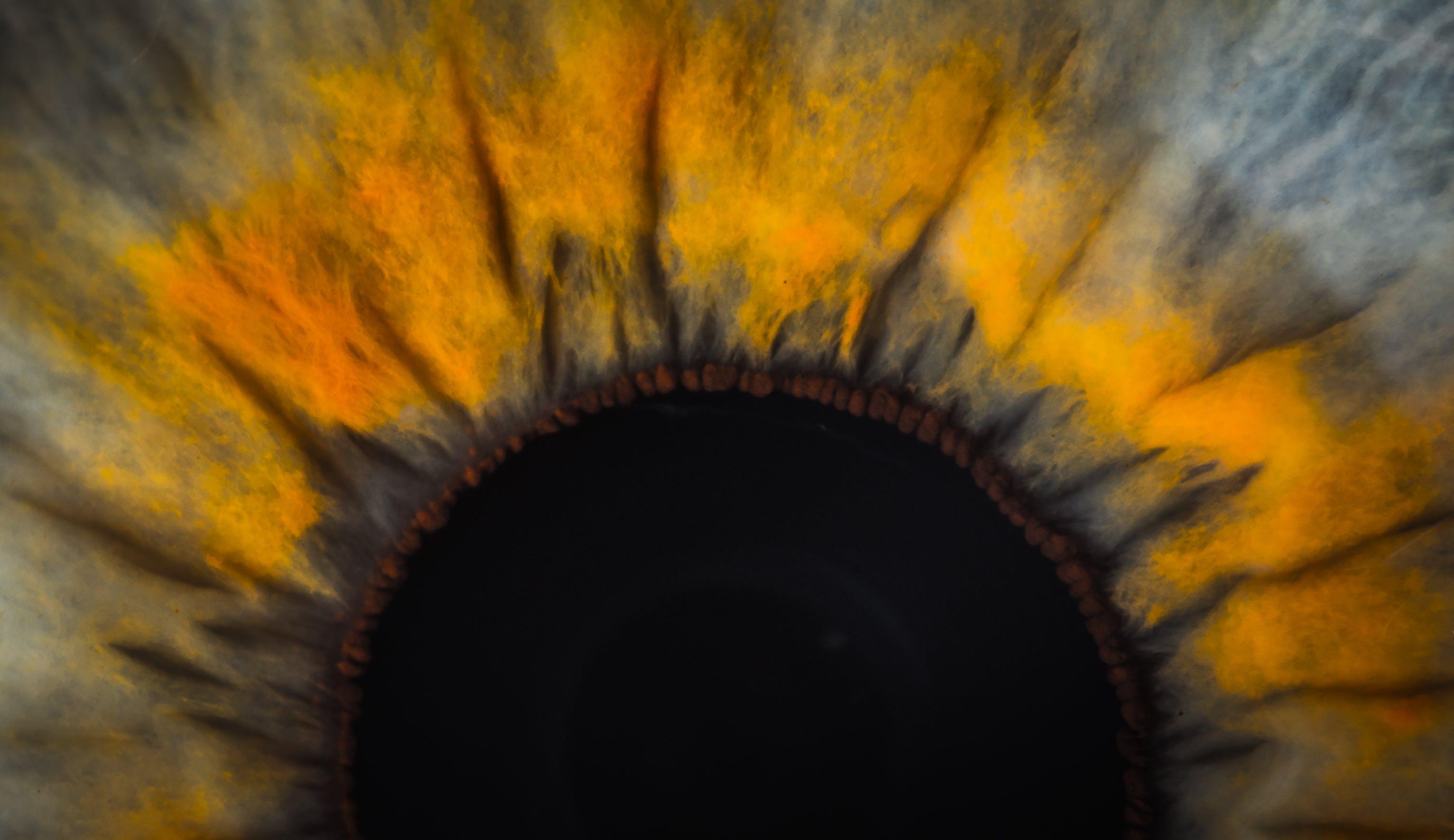 Free stock photo of eye, macro