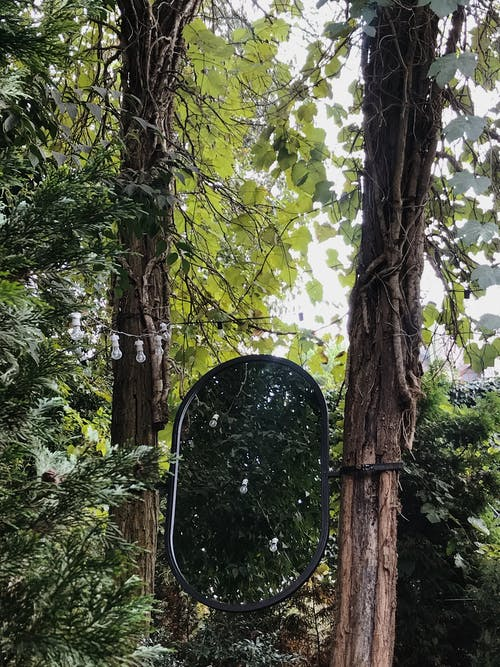 Black Chair Under Green Leaf Tree
