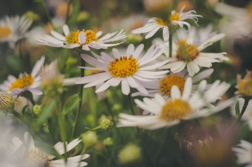 Gratis stockfoto met blad, bloem, bloemblaadje