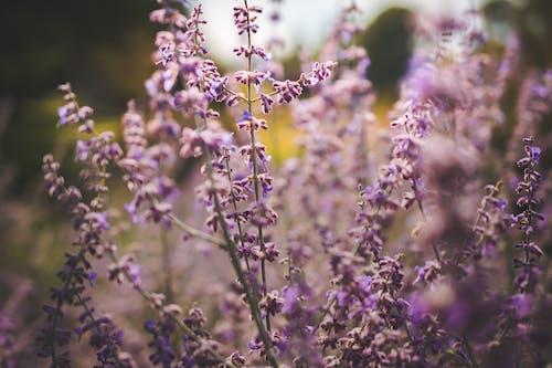 Gratis stockfoto met aromatisch, blad, bloeiend